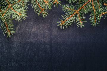 Christmas tree branches on dark blue background. Space for text
