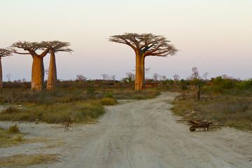 Sunset in Baobab Alley - Madagascar