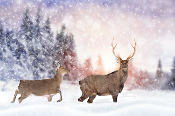 Wall Mural - Deer in winter forest