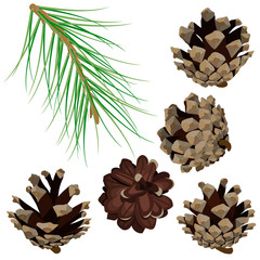 Set with pine branch and cones. Modern flat decor elements for invitations, print, poster, card, banner. Isolated on white background.