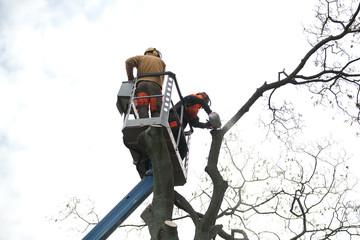 Baum fällen baum beschneiden baumschnitt