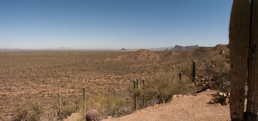 Sonoran Desert Panorama