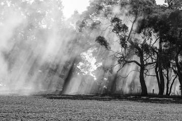 Sun light through wood burning smoke from Australian bushfires