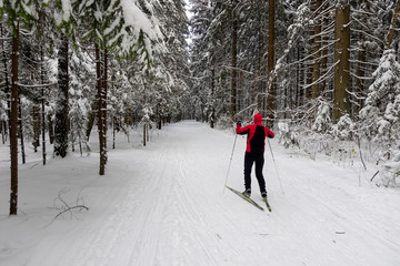 The skier in the wood