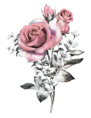 watercolor flowers. floral illustration in Pastel colors, pink rose. branch of flowers isolated on white background. Leaf and buds. Cute composition for wedding or greeting card. eucalyptus