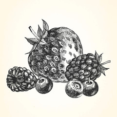 Hand-drawn illustration of  Berries. Vector.