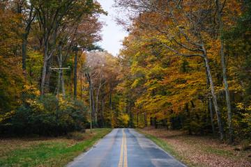 Autumn color along Carmichael Road, near Wye Island, Maryland.