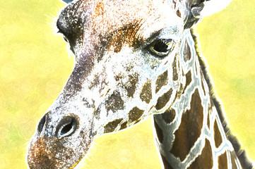 close up of colorful giraffe