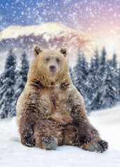 Wall Mural - Wild brown bear