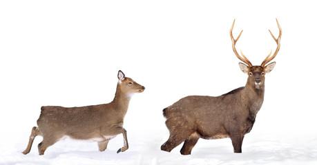 Wall Mural - Close young deer