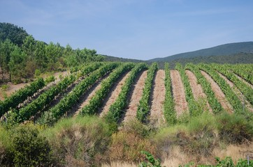 Vineyard on a hill in southern France
