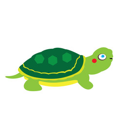 Isolated tortoise