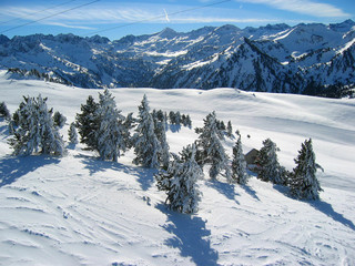 Mountain and snowy forest
