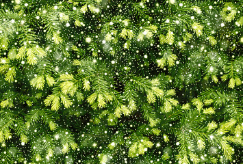 Young shoots of pine tree background texture with shiny snowfall