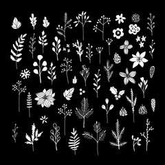 Set of white chalk flowers, leaves and branches on blackboard. Isolated Christmas floral elements. Hand drawn vector.
