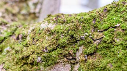 Moos und Pilze auf einem Baum