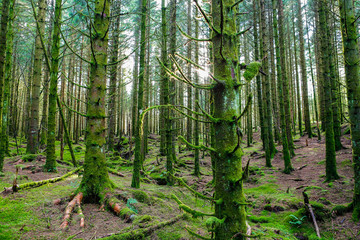 Old green forest