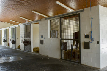 Horse in stall of equine hospital