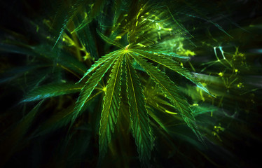 cannabis background. marijuana club.