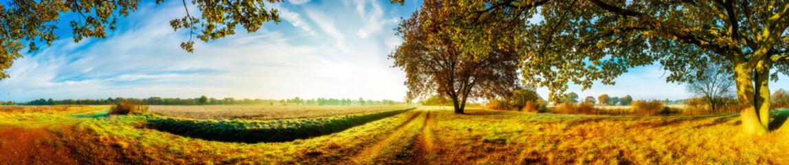Panorama einer herbstlichen Landschaft mit Feldern und Bäumen