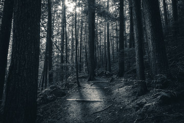 Black and white forest sunlight.