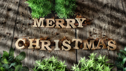 Word of Merry Christmas with plant on wooden background, nature decorative idea