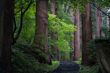 林の静けさ