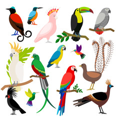 Exotic tropical birds isolated on white background. Bird art vector elements