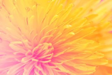 Floral fantasy, soft blur style. Colorful dandelion poster, mobile wallpaper.
