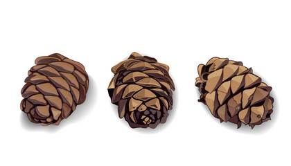 Cone icons set for your design. Pinecone. Pine cone. Fir-cone. Fir cone. Realistic vector illustration isolated on white background