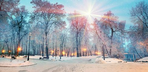 Rays snow star