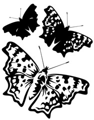 butterfly black and white vector design and silhouette set