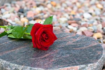 Rote Rose zum Gedenken