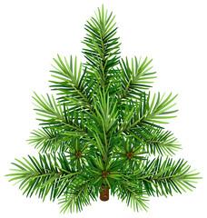 Green Christmas pine tree