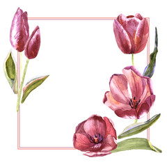 Wildflower tulip flower frame in a watercolor style isolated.