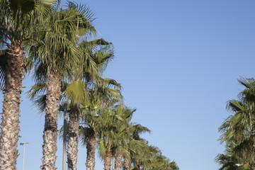 Palm Trees, Malvarosa Beach, Valenica