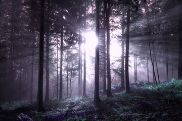 Pink colored fantasy foggy forest tree with sunlight.