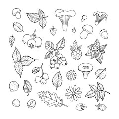 Vector doodle floral set. Graphic collection with leaves, flowers, raspberries, strawberries, mushrooms and walnuts