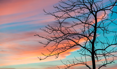 Silhouetted trees without leaves in twilight background
