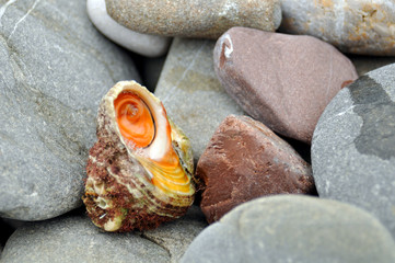 Shells on the rocks by the beach.