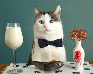 cat in restaurant with milk and raw fish