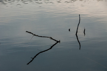 branches reflected in water