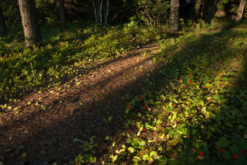 Forest path with strong shadows