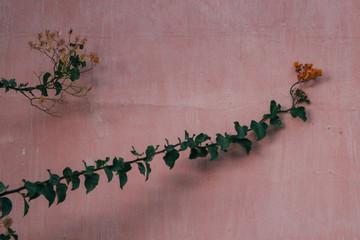 Moroccan Succulents