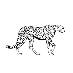 black and white cheetah vector illustration
