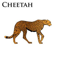 colored cheetah illustration
