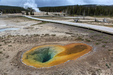 Forests and geysers in Yellowstone.