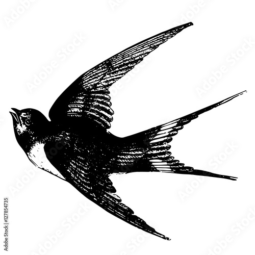Sketch Tattoos Flying Swallow