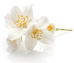 Spoed Fotobehang Bloemen Jasmine flowers isolated on white background cutout