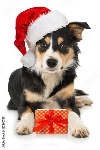 junger hund mit weihnachtsgeschenk. Black Bedroom Furniture Sets. Home Design Ideas